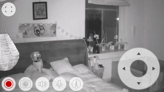Kamera Locon BD.03, czyli widok z telefonu komórkowego na psa siedzącego nocą na łóżku w sypialni